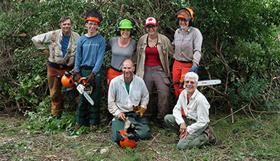 Volunteers controlling invasive species with chainsaws